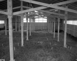 Trench layout inside shed, facing North along length of shed (right of centre)